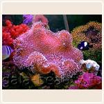 Как проводится коралловый пилинг Rose de Mer